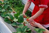 2009.03.21鯉魚潭水庫,大湖草莓:DSC_9755.JPG