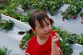 2009.03.21鯉魚潭水庫,大湖草莓:DSC_9757.JPG
