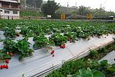 2009.03.21鯉魚潭水庫,大湖草莓:DSC_9758.JPG
