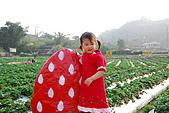 2009.03.21鯉魚潭水庫,大湖草莓:DSC_9737.JPG