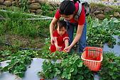 2009.03.21鯉魚潭水庫,大湖草莓:DSC_9746.JPG