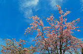 IF - 花見   九州 :大分縣湯布院風景區