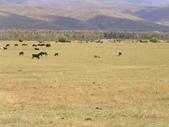 新疆那拉提草原:那拉提040.jpg