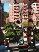 [庭園造景]木柵政大二街:美空設計-南方松