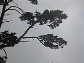 野豹車隊95年10月郡大林道活動:DSCN1095