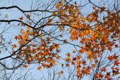 約在冬季:楓紅-702.jpg