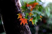 約在冬季:楓紅-609.jpg