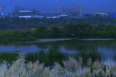 鹿角溪人工濕地-芒花搖曳秋意濃:鹿角溪人工濕地~芒花-07.jpg