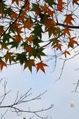 約在冬季:楓紅-704.jpg