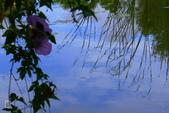鹿角溪人工濕地-芒花搖曳秋意濃:鹿角溪人工濕地~芒花-11.jpg