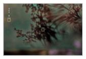 櫻花の戀:櫻花夢影-48.jpg