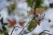 冬戀:楓紅-217.jpg