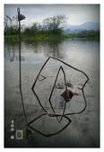濕地風情~2:濕地風情-102.jpg