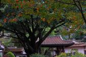 再訪林家花園~2:林家花園-3008.jpg