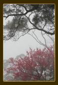 土城太極嶺賞櫻:太極嶺-113.jpg