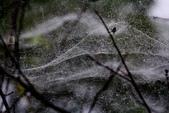 冬戀:雨天 撒網