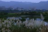 鹿角溪人工濕地-芒花搖曳秋意濃:鹿角溪人工濕地~芒花-17.jpg