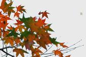 約在冬季:楓紅-701.jpg