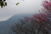 2013陽明山賞花趣:陽明山-065.jpg