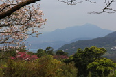 2013陽明山賞花趣:陽明山-066.jpg