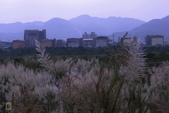 鹿角溪人工濕地-芒花搖曳秋意濃:鹿角溪人工濕地~芒花-19.jpg