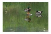 浮光獵影~3:春塘水暖鴨先知