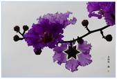 紫色的夢~大花紫薇:大花紫薇-34.jpg