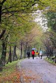 冬戀:空山新雨後.青楓點點紅