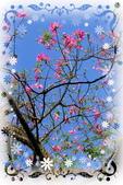 秋季戀歌:美人樹-17