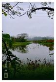 濕地風情~2:濕地風情~13.jpg