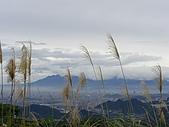 20090104鳥來菜刀崙山向天湖山:20090104菜刀崙山 (15).JPG
