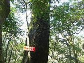 20080111北插天山:CIMG0071.JPG