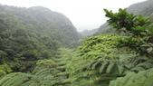 120422跑馬古道鴻子山:DSC02550.JPG
