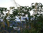 20090104鳥來菜刀崙山向天湖山:20090104菜刀崙山 (17).JPG