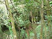 20081228石碇烏月山:081228烏月山 (12).JPG