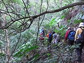 20090104鳥來菜刀崙山向天湖山:20090104菜刀崙山 (6).JPG