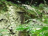 20081228石碇烏月山:081228烏月山 (18).JPG