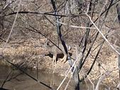 美國錫安國家公園:DSCN7415