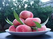 歡迎光臨我們新家:美國自家後院種的潘桃...超甜又多汁