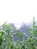 太魯閣大禮大同部落-砂卡噹步道:DSC03814.JPG