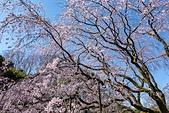 2019.3.32-25東京櫻-第五天:DSC00314.jpg