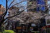 2019.3.32-25東京櫻-第五天:ED9A3830.jpg