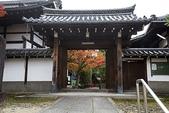 2017.11.19-24關西賞楓-第三天-東福寺:ED9A8649.jpg