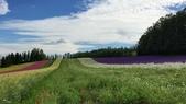 富良野富田農場、紫彩美瑛拼布之路:37769253_1861432080546370_4294540835812278272_n.jpg