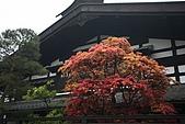 980425_黑部立山 礪波飯店:IMG_2989.JPG