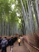 京阪神自由行 01.30~02.07.2015:0202 京都嵐山竹林歩道