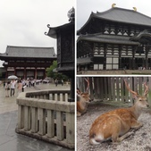 京阪神自由行 06.23.2013:相簿封面