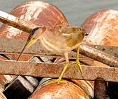 黃小鷺:DSC_4914.JPG