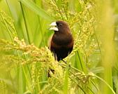 黑頭文鳥:DSC_5177.JPG