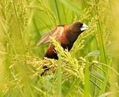 黑頭文鳥:DSC_5190.JPG